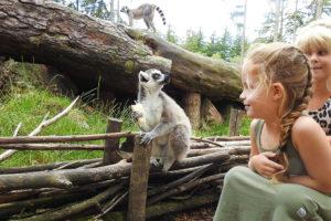 Dierenfeestje in Dierenpark Amersfoort